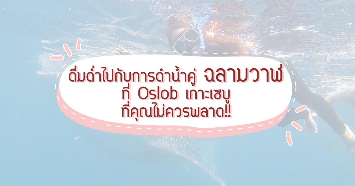 ดื่มด่ำไปกับการดำน้ำคู่กับฉลามวาฬที่ Oslob เกาะเซบูที่คุณไม่ควรพลาด !!!